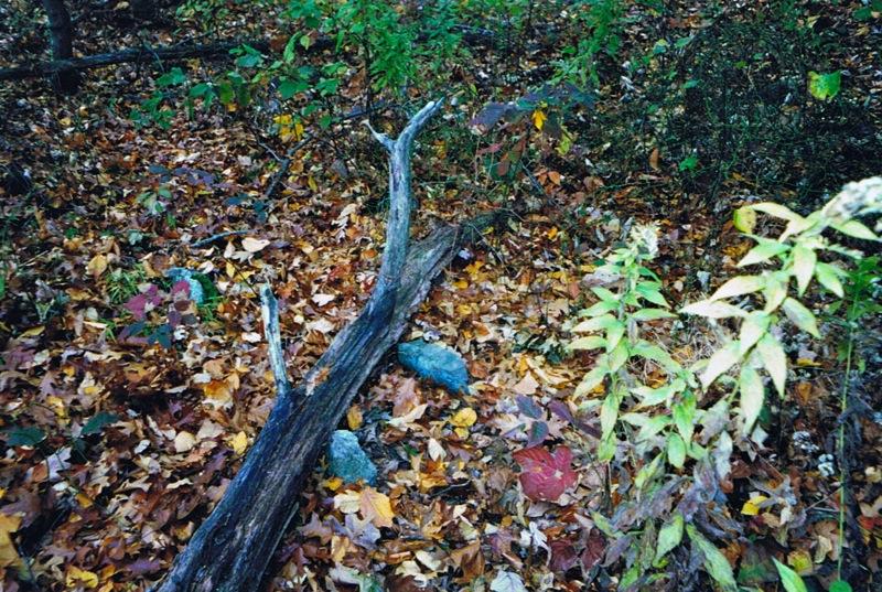 small-fieldstones-10-2001-2-picture
