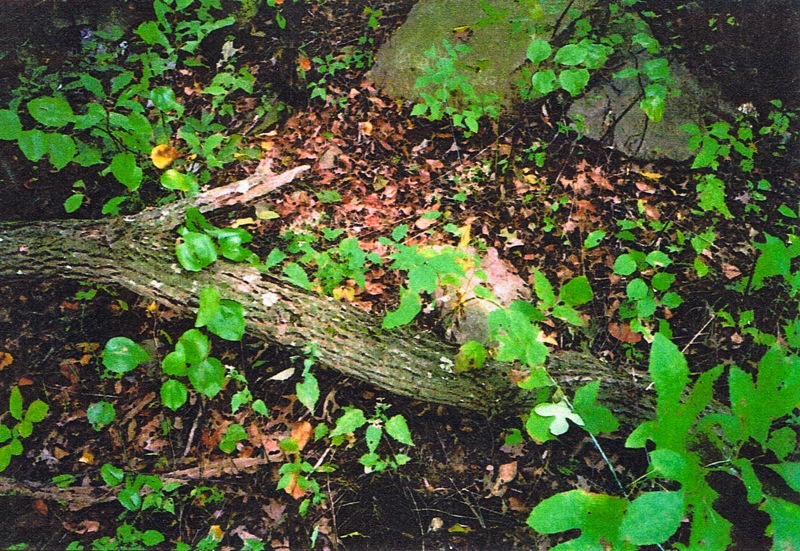 65-partridge-run-stone-wall-10-2001-picture